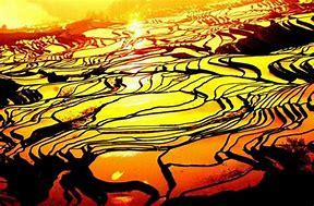 元阳县网络营销 的图像结果