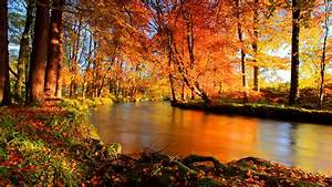 River, Between, Colorful, Trees, Covered, Forest, Hd, Nature, Wallpapers