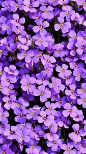 Aubrieta, 4k, Wallpaper, Violet, Flowers, Blossom, Spring, Bloom, Purple, Floral, Background, 5k