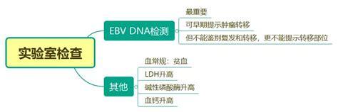 EB病毒核酸检测助力鼻咽癌早期筛查-武汉明德生物科技股份有限公司