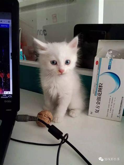 萌萌哒小奶猫不完全饲养指南